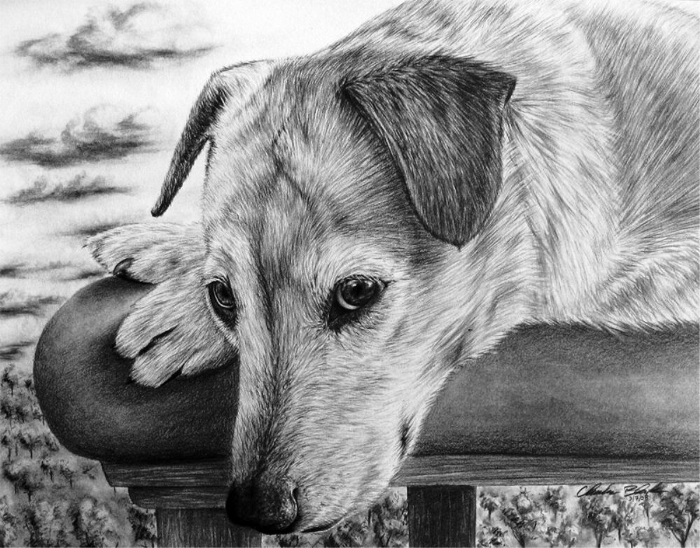 Картинки грустные животные нарисованные