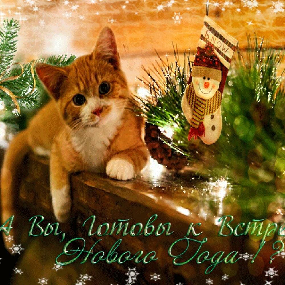 Новогоднее настроение открытка, фото для документов