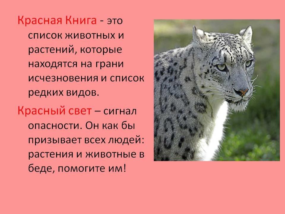 счастья есть фото животных россии занесенные в красную книгу практически любой