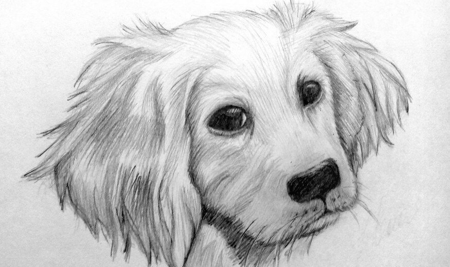 Картинки для срисовки с собаками