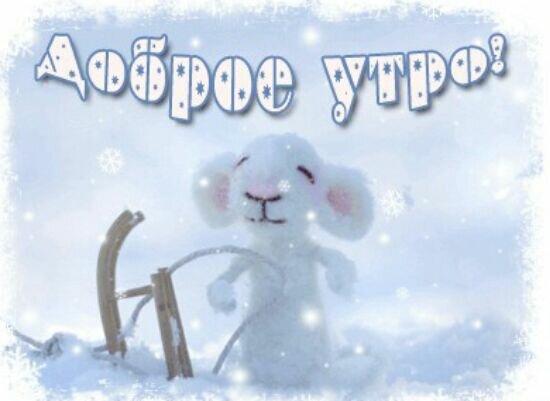 Животных, картинки прикольные про снег с добрым утром