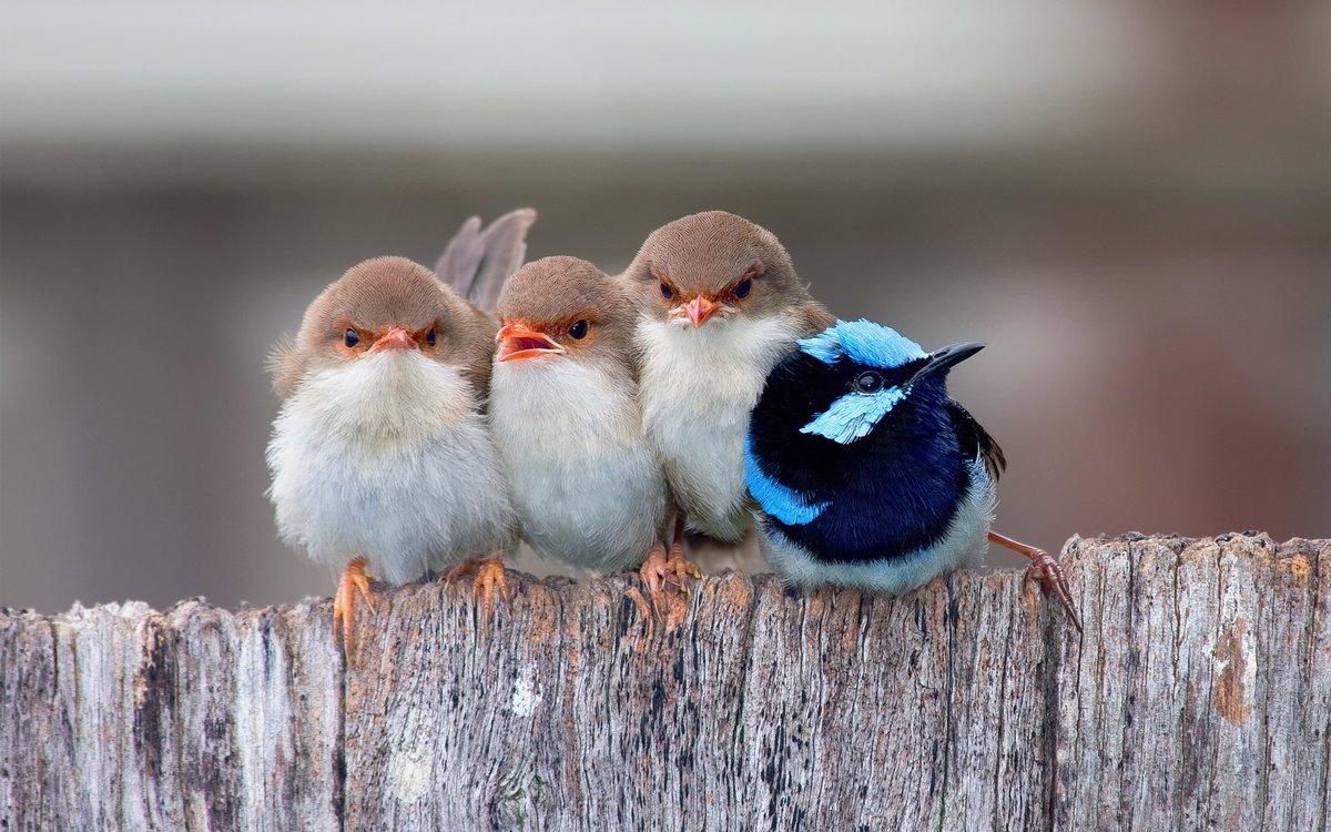 Картинки смешные птичек, для друзей машинами