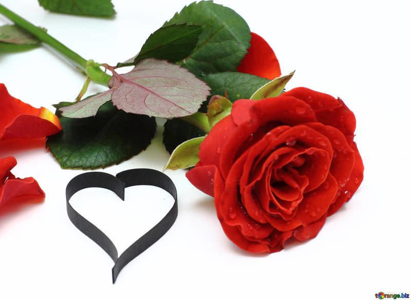 картинки сердце и роза розы запросу