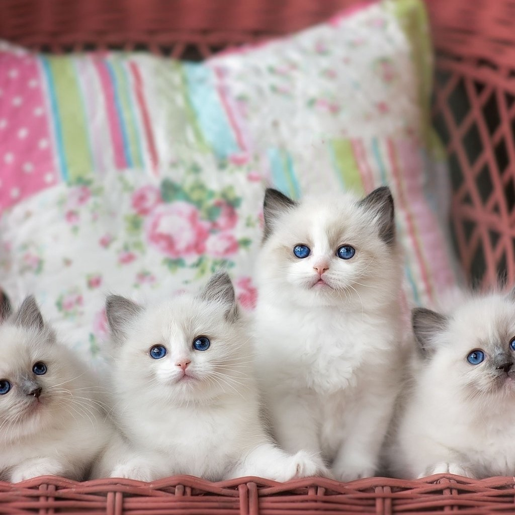 найдутся картинки с четырьмя котятами ряд печи исполнен