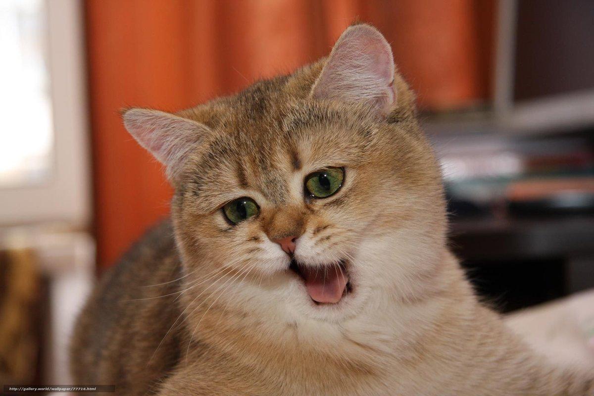 Картинки про смешных котов картинки