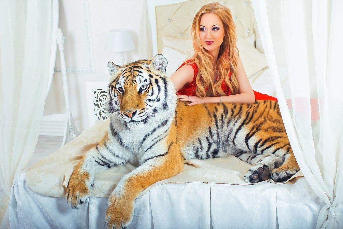 Свадьбе, женщина с тиграми картинка