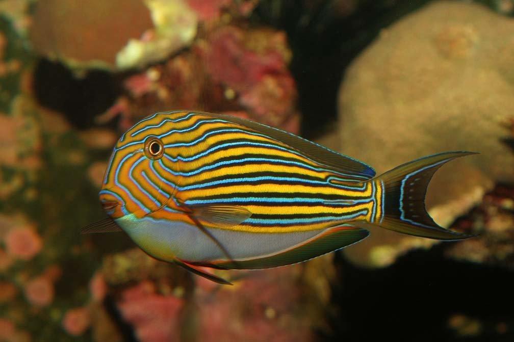 Красивые рыбы с названиями фото