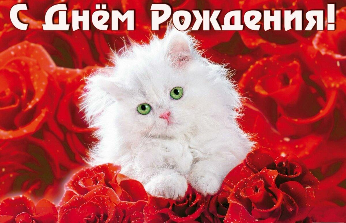 Картинки, открытка к дню рождения с кошками женщине