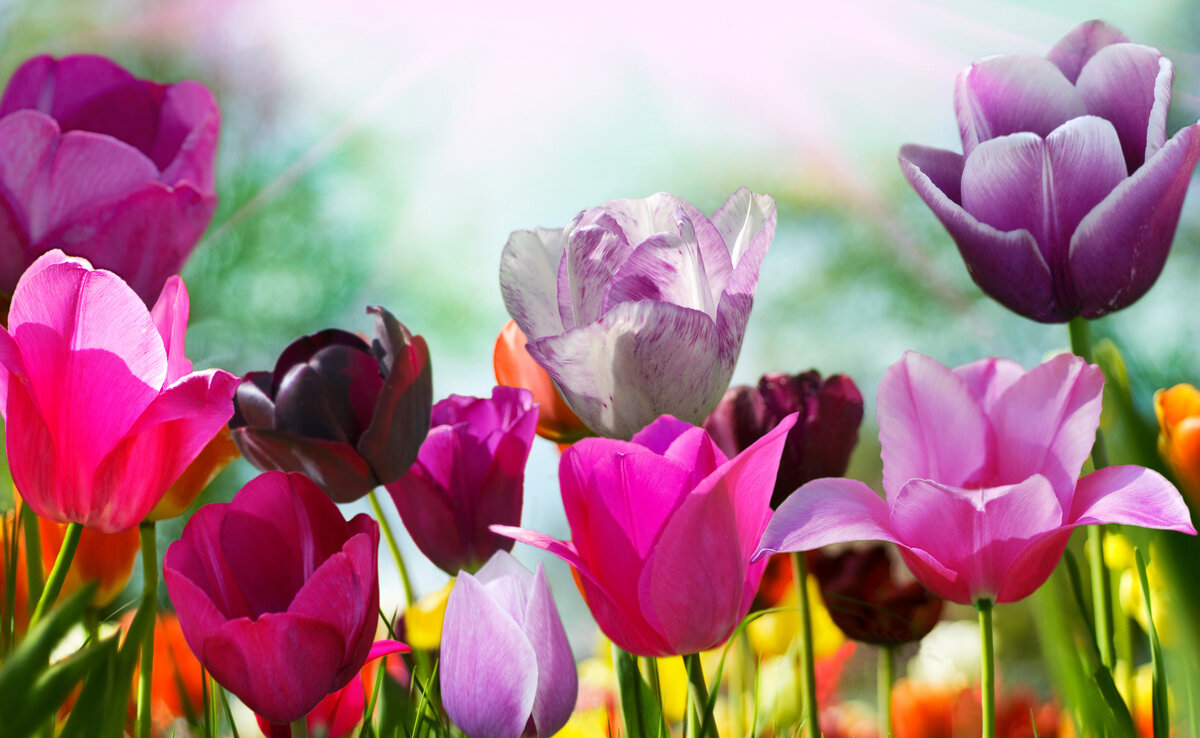 День рождения, открытки рабочего стола цветы