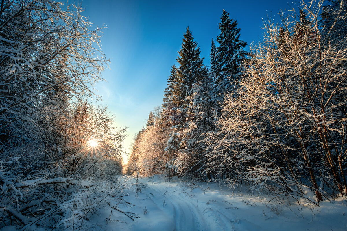 Зимний лес утром картинки