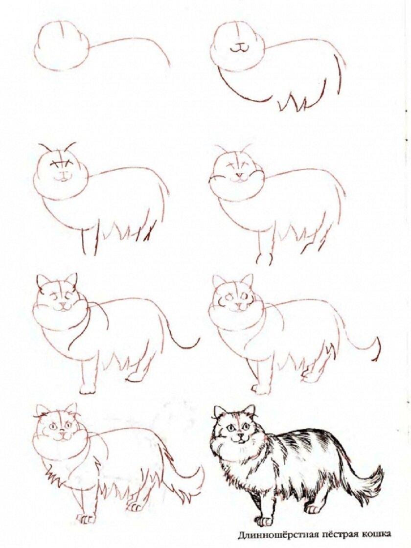 Картинки как рисовать кошек