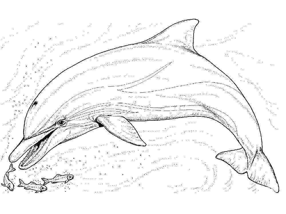 «Раскраска дельфин скачать и распечатать» — карточка ...