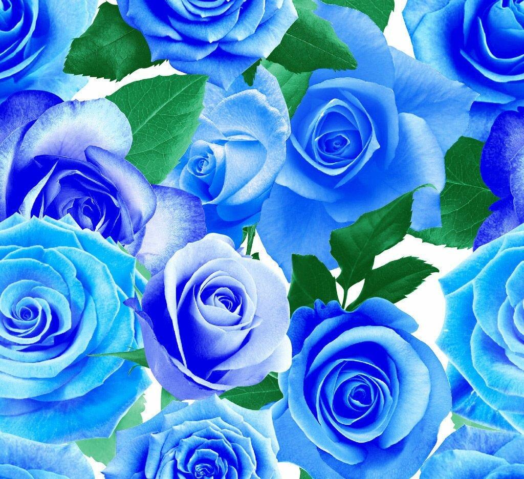 Днем, открытки с голубыми розами