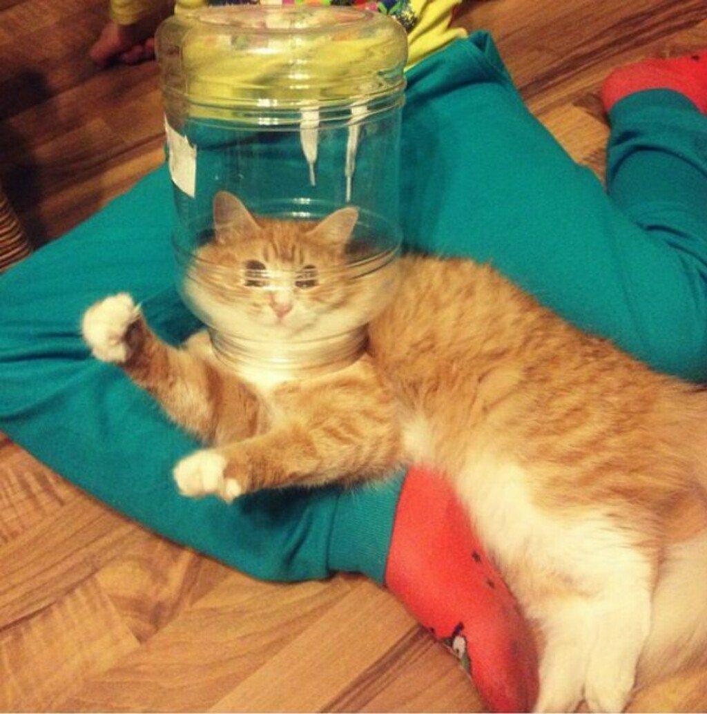 Смешные картинки про котов кошек и котят до слез