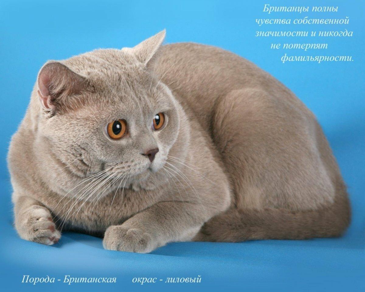уже разновидности кошек с картинками под названием