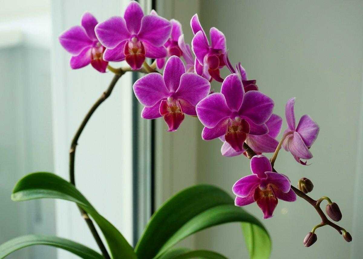 орхидея и уход за ней в картинках же, как эти