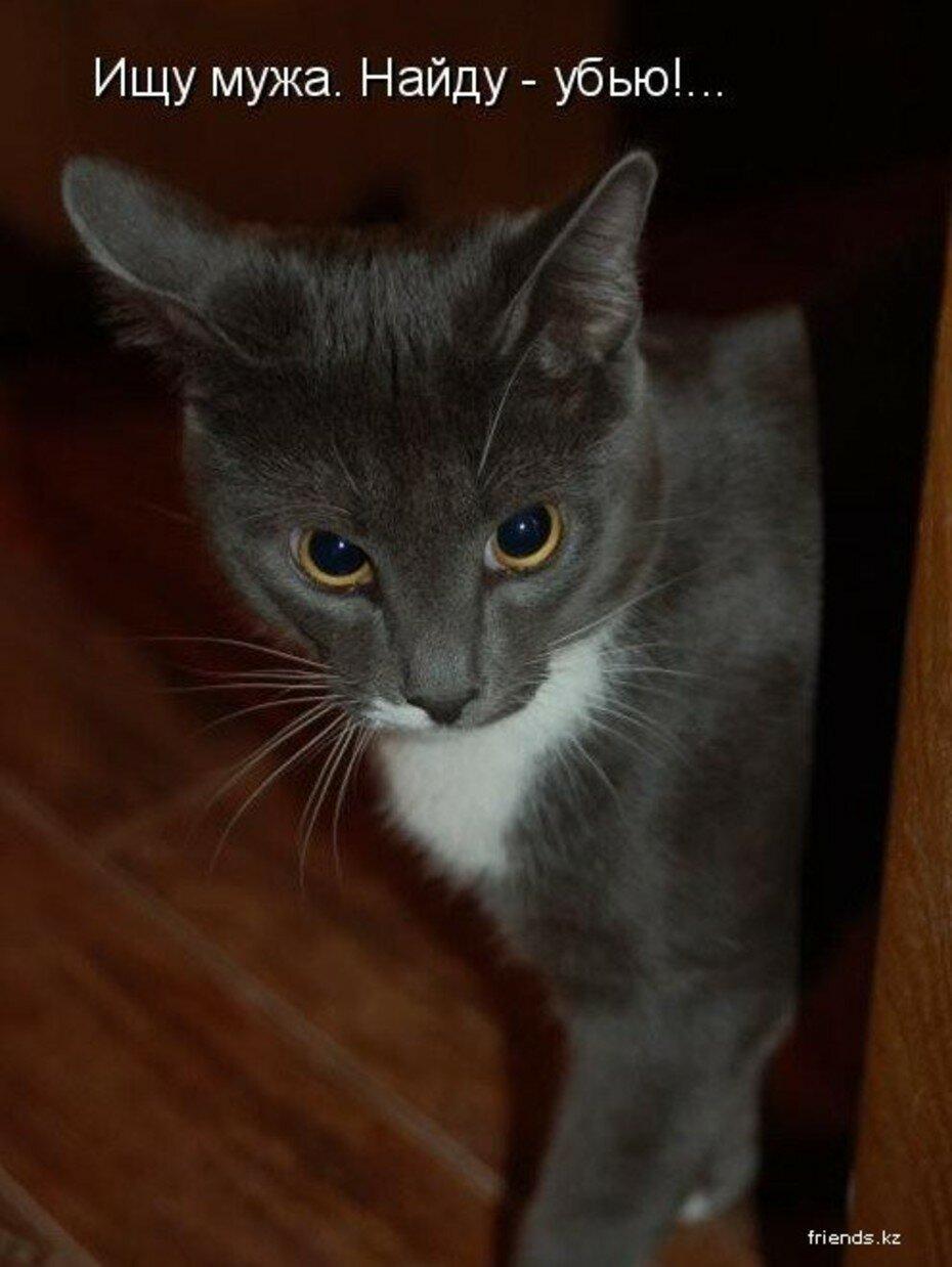 Воля, картинки смешных котят с подписями