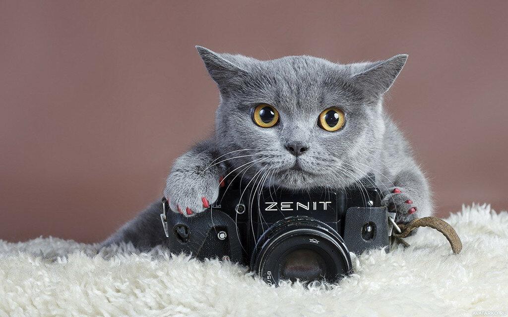 Прикольные картинки на аву с котом, мерцающие открытки
