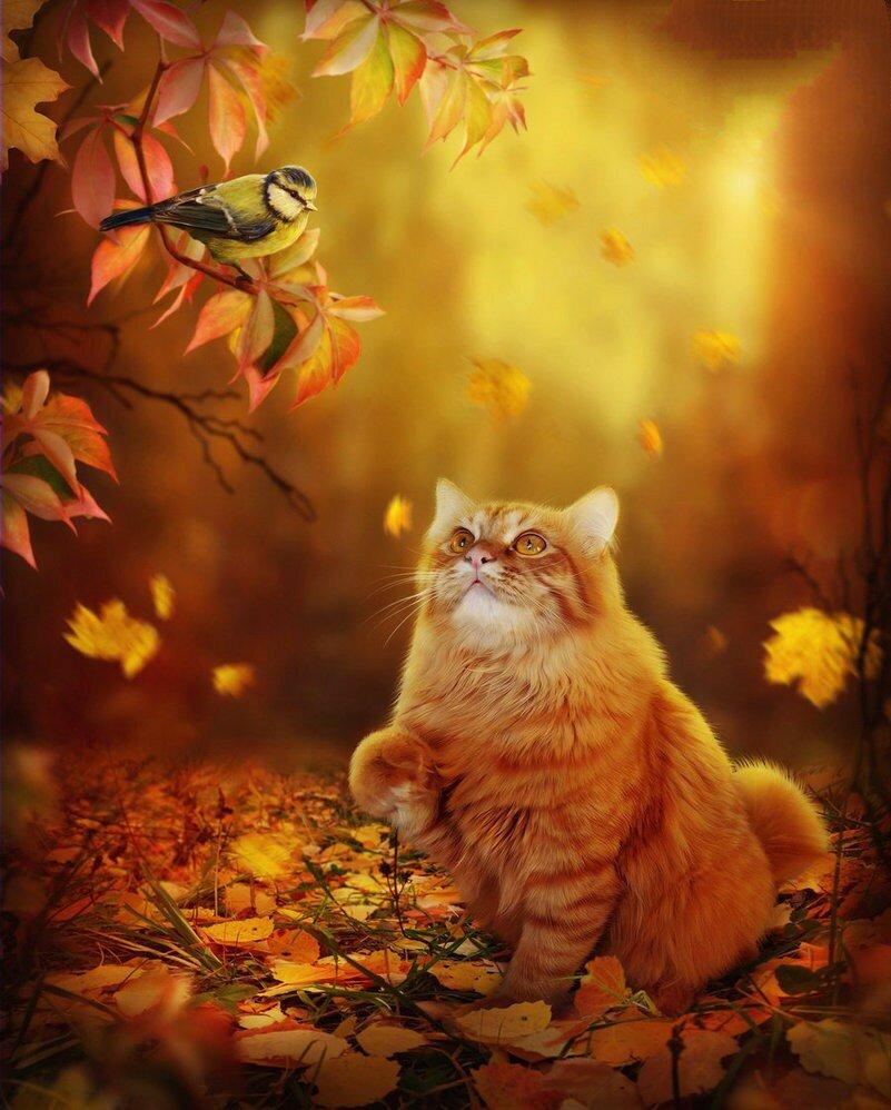 Открытки днем, открытки кота осени