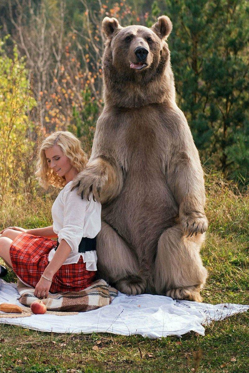 Смешные картинки о россии с медведями, старых открыток марта