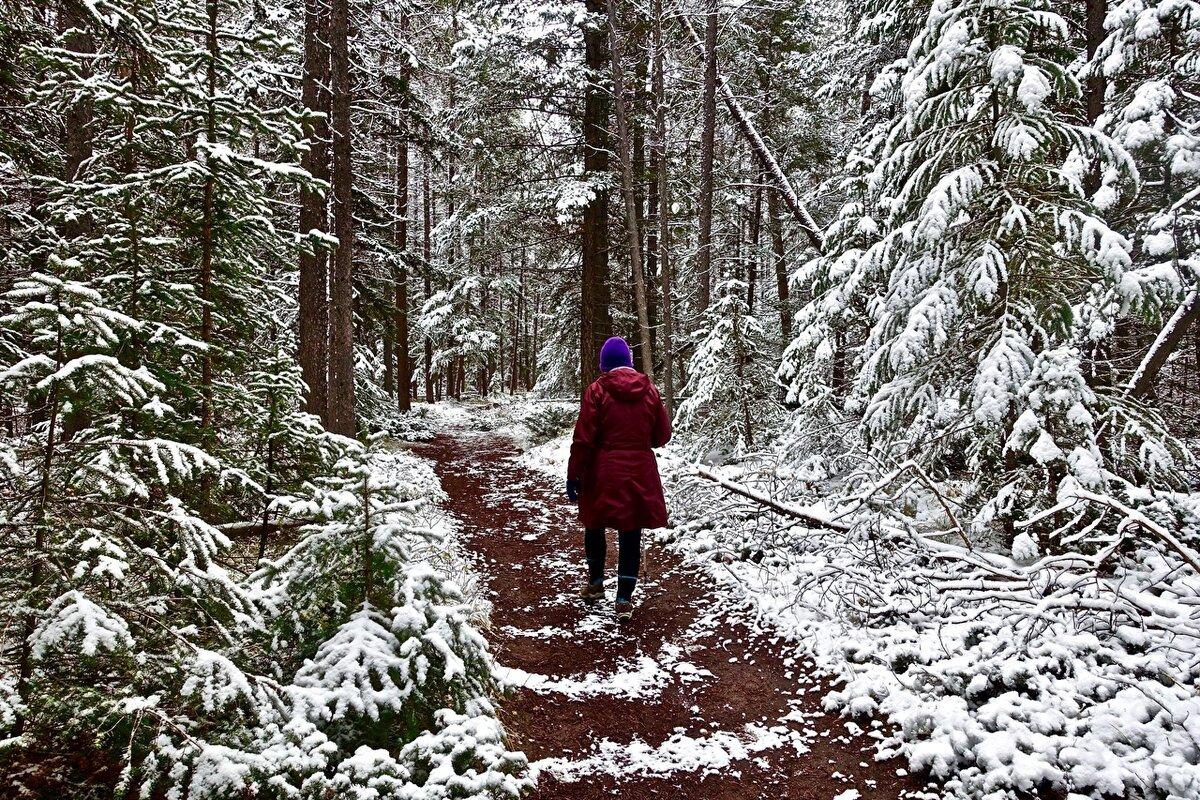 путешествие в зимний лес с фотоотчетом цветение душистого
