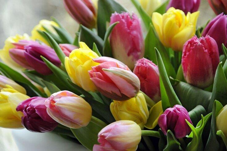 Крутые картинки тюльпаны
