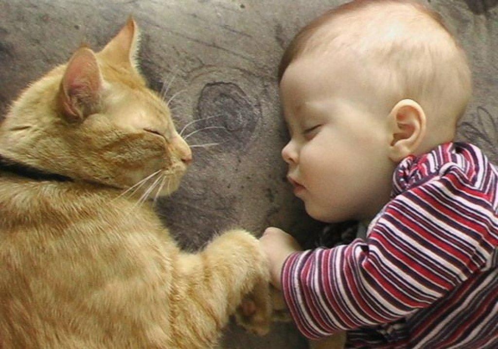 Картинки смешные с кошками и людьми