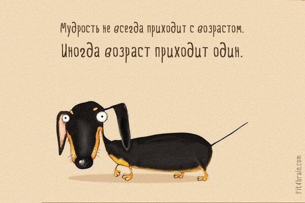 Смешные картинки мудрость