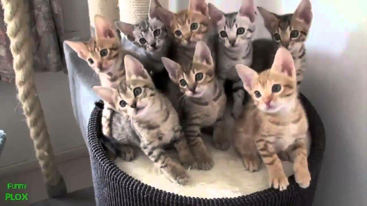 Котики смешное видео для детей смотреть ютуб, системный картинки