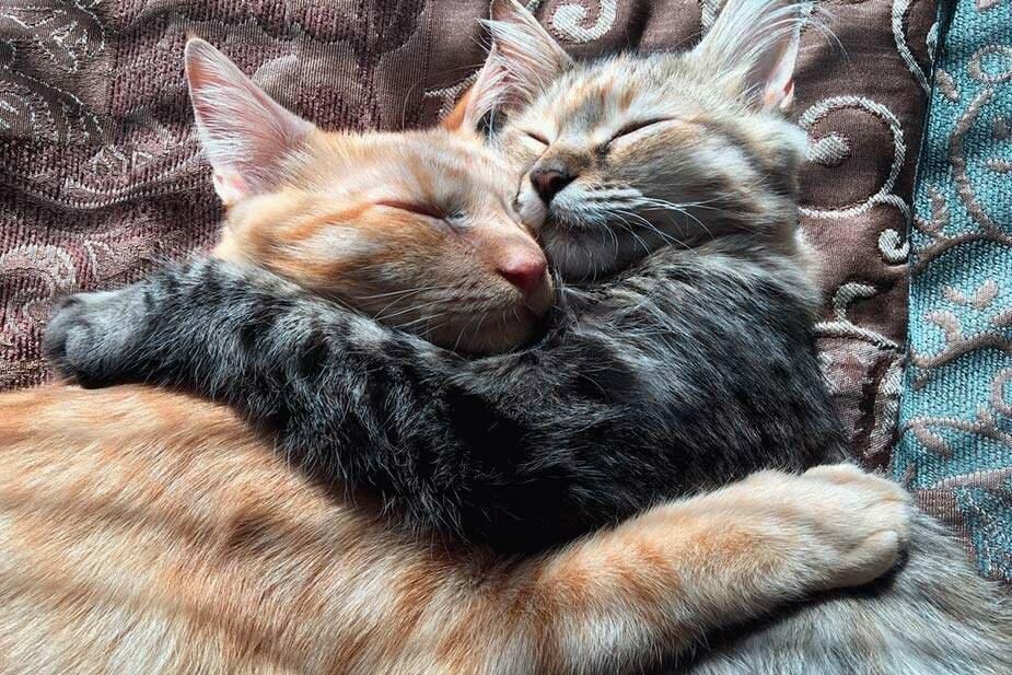 Картинки две кошки спят, приглашение распечатать картинки