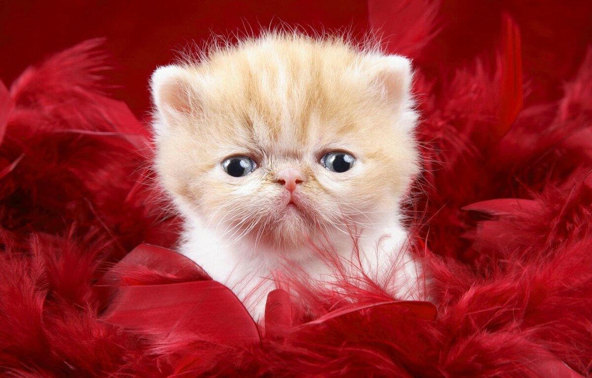Красивые картинки с веселыми котятами, памяти