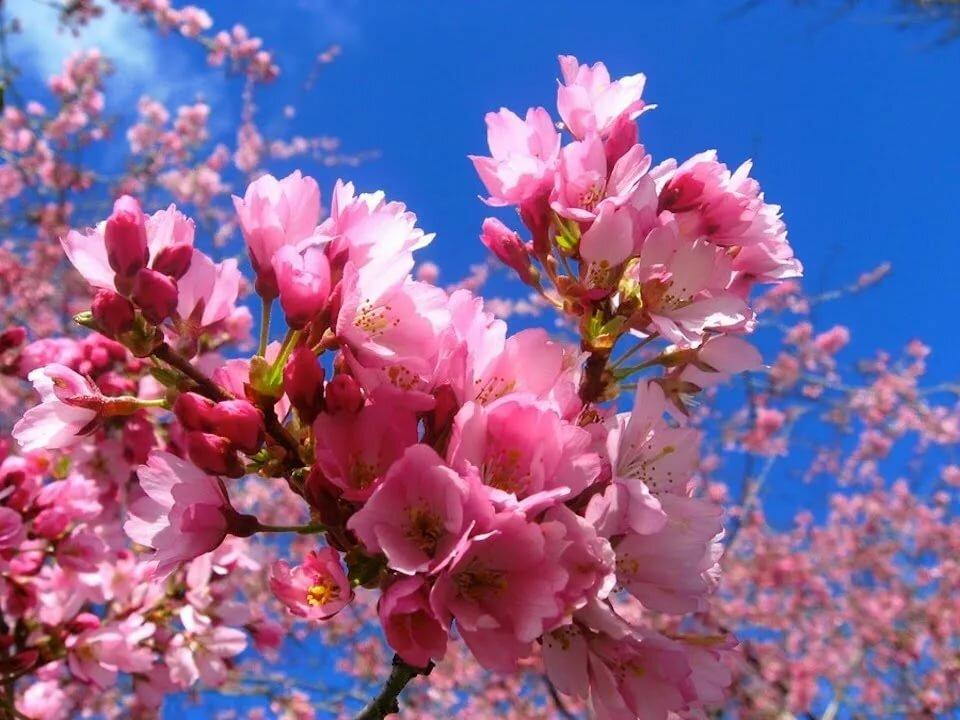 Картинки с весенними цветами, комиксы