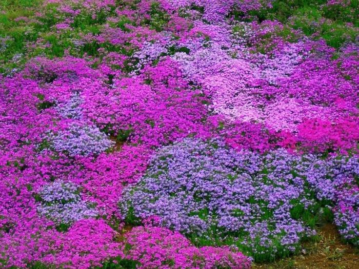 Фото цветов лилия значение