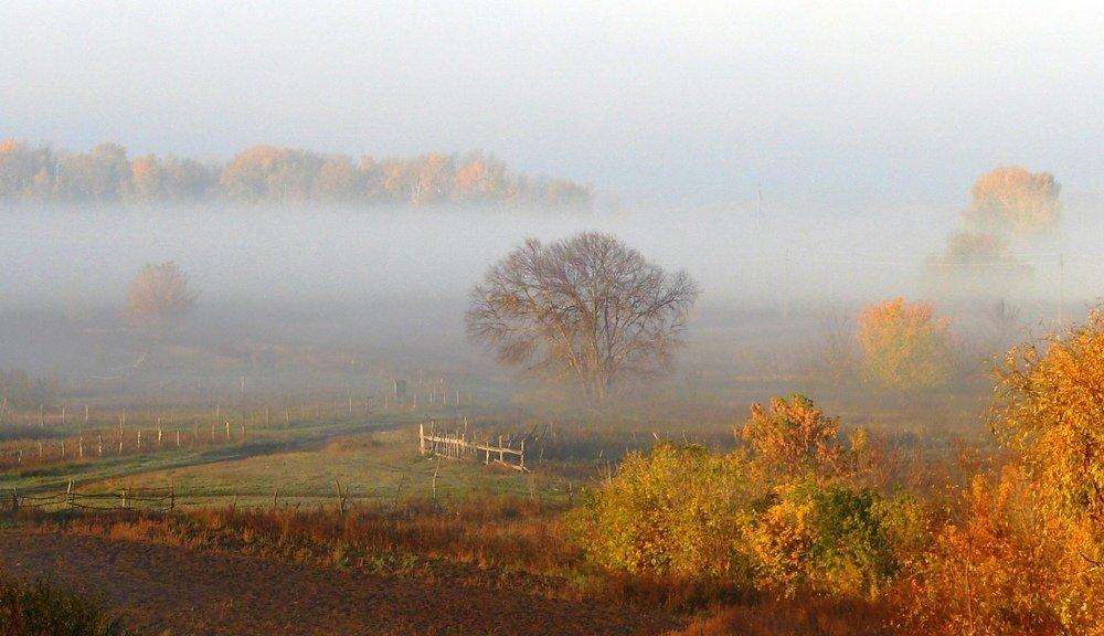 Художественное фото осеннего тумана