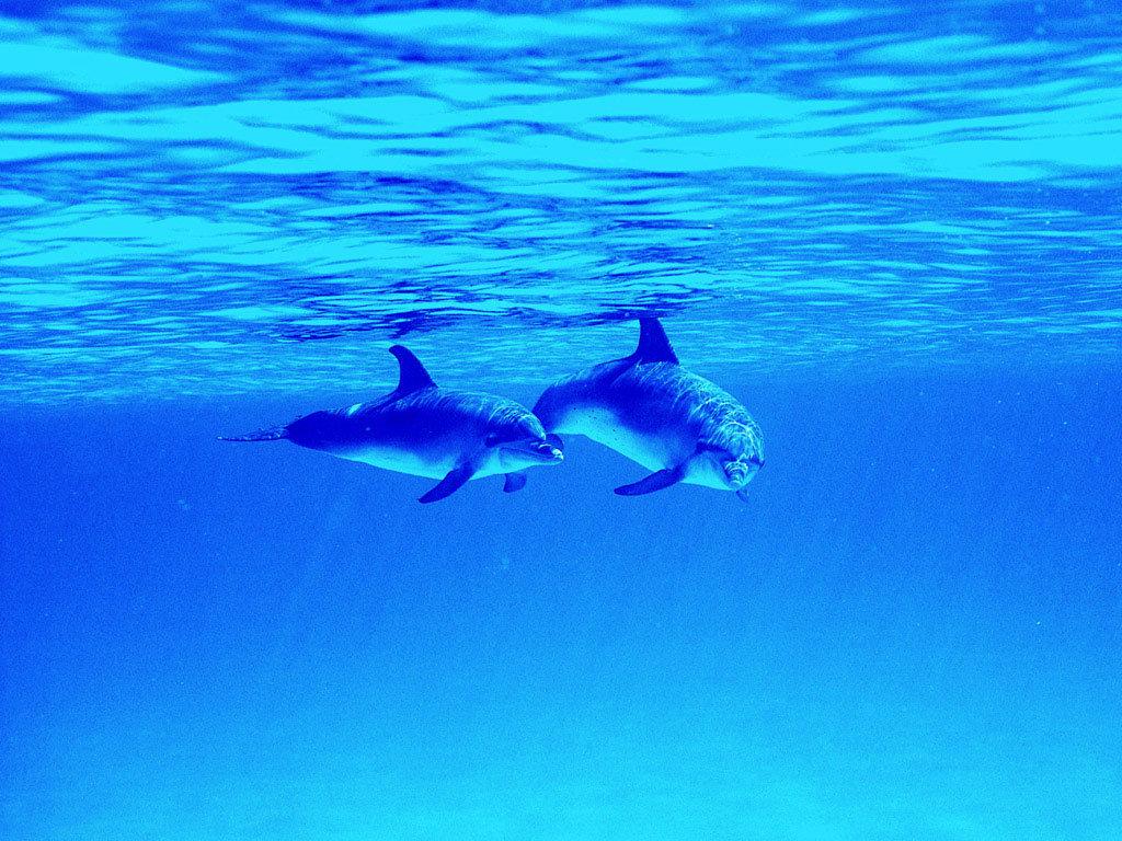 Картинка плывущие дельфины