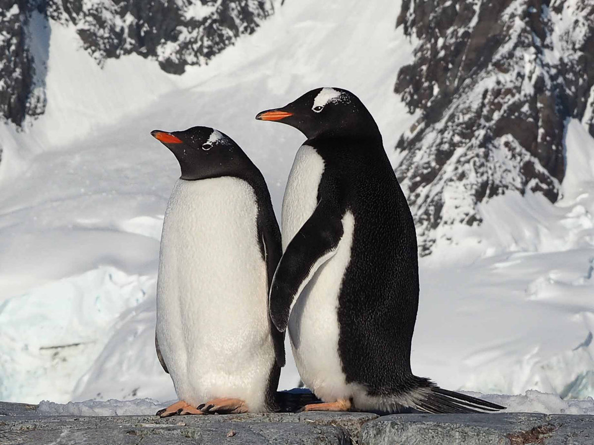 картинка двух пингвинов люмьер доказали