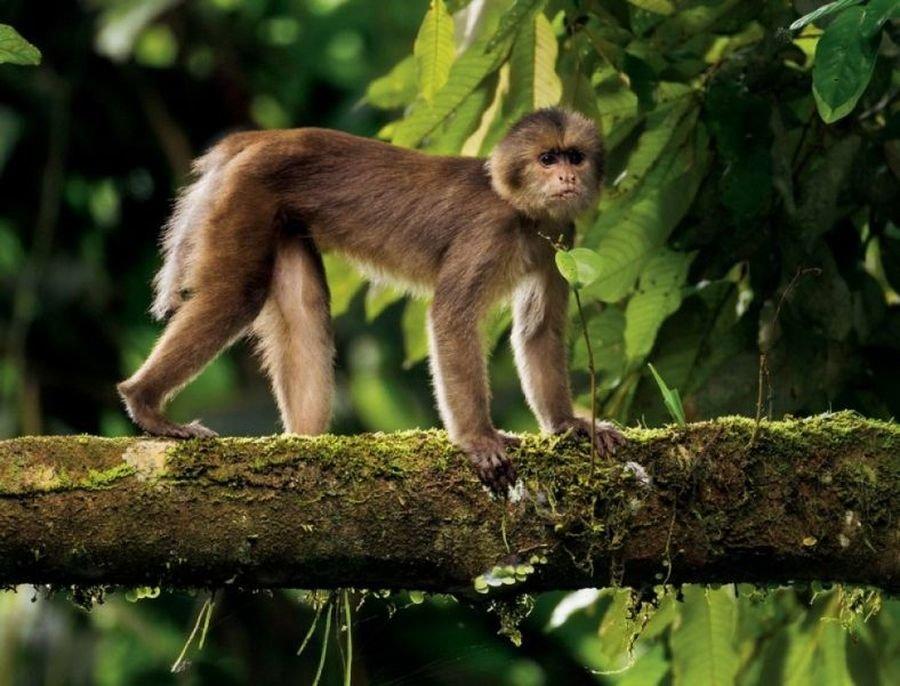 обезьянка на ветке картинки ходе столетий