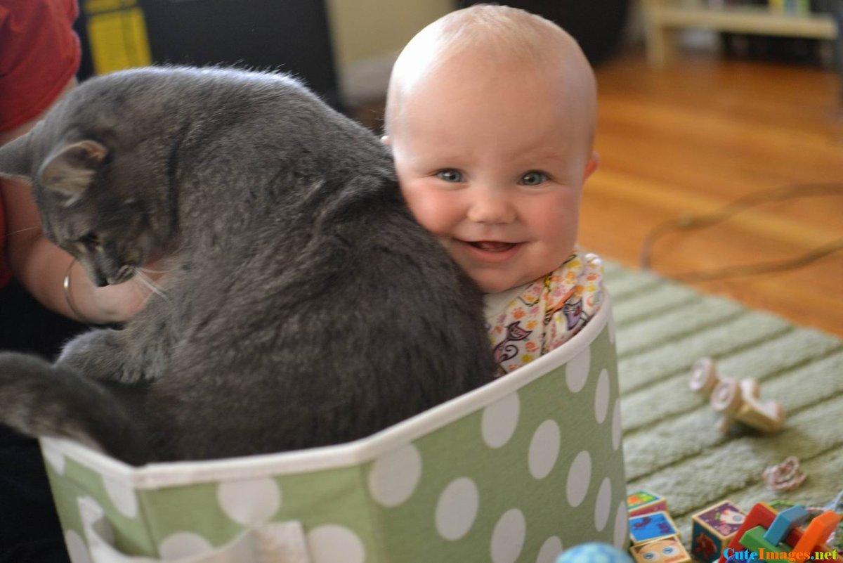 Картинки с забавными животными для детей, про
