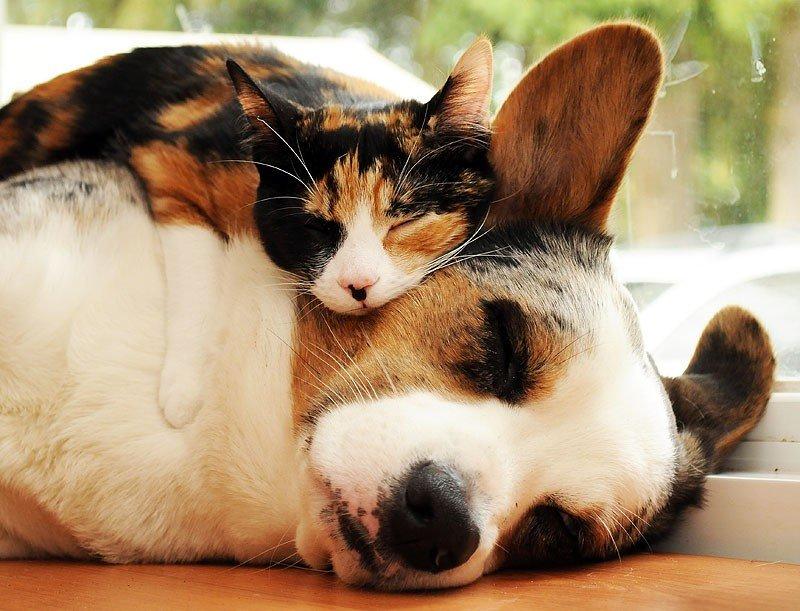 Прикольные животные картинки кошки и собаки, празднику мамы