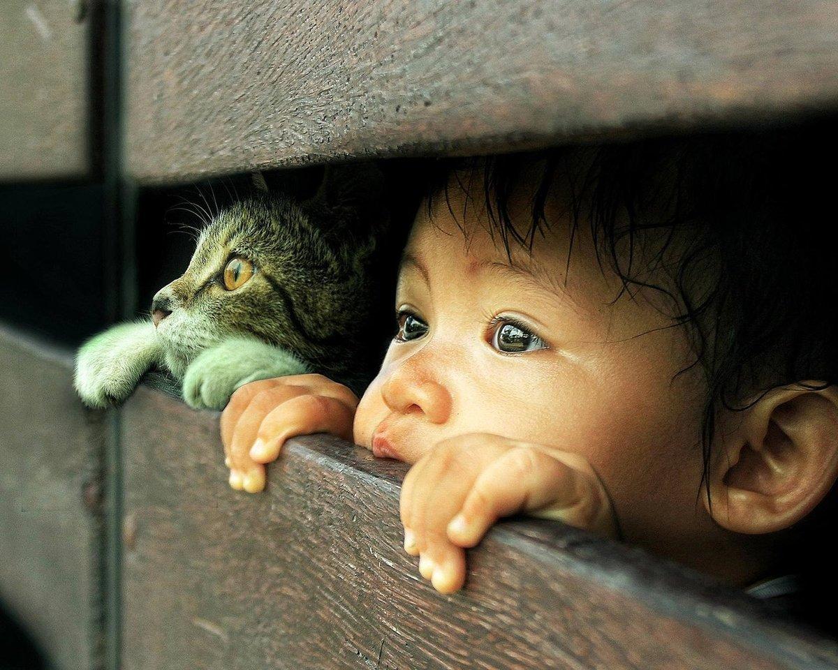 Сплетни, картинки на телефон дети и животные