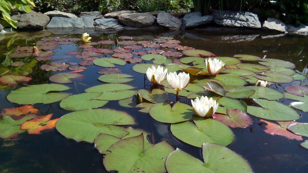сообщили, что картинки цветов водоемов с названиями белый детеныш