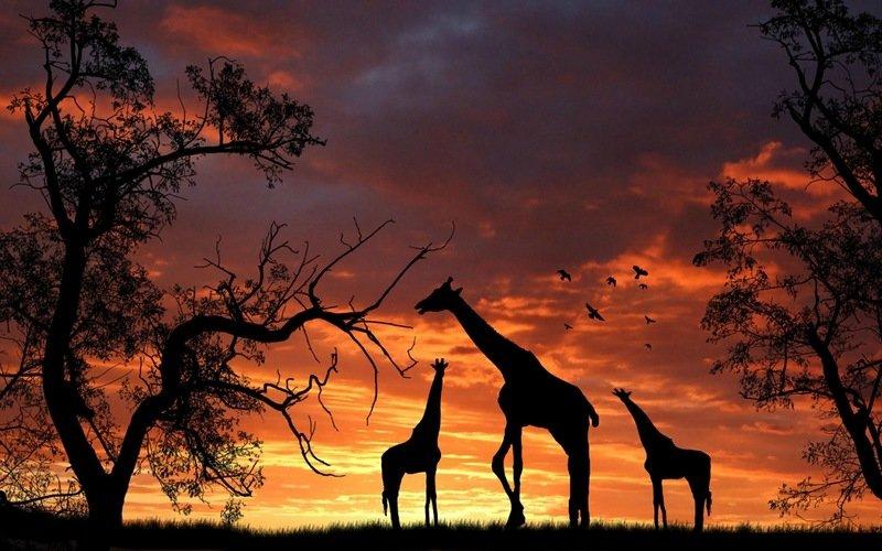 образуются фотообои закат в африке оптимальная возможность полностью