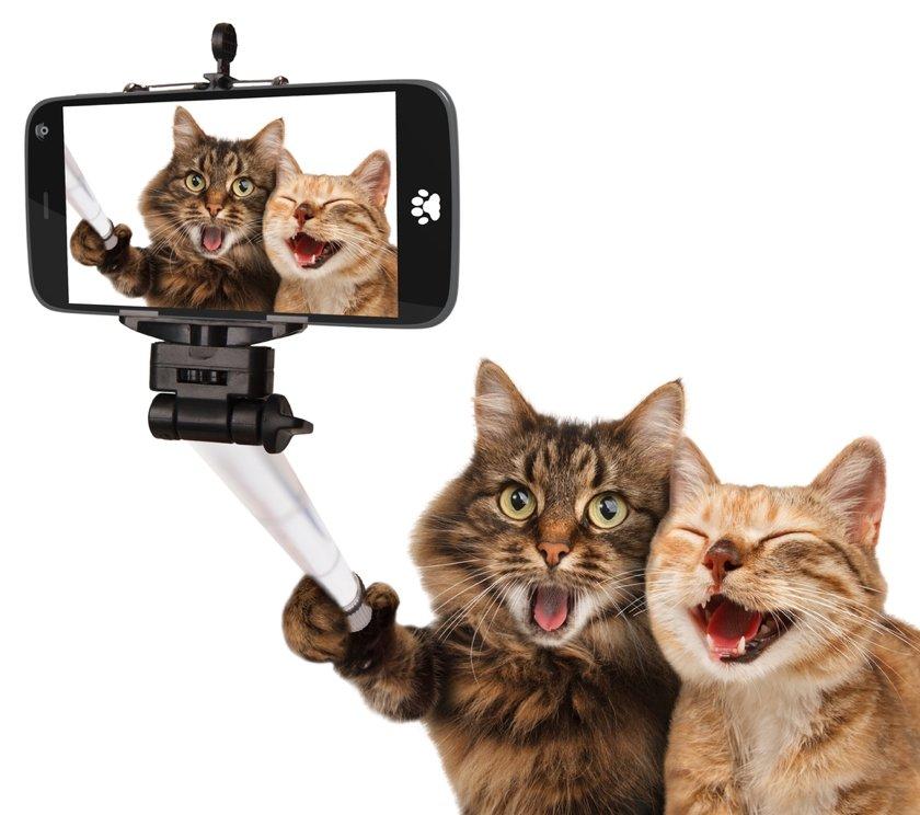 Прикольное картинки в смартфоне