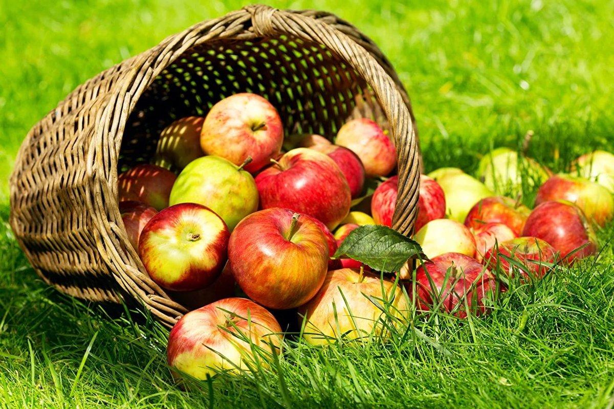 Яблоки красивые картинки