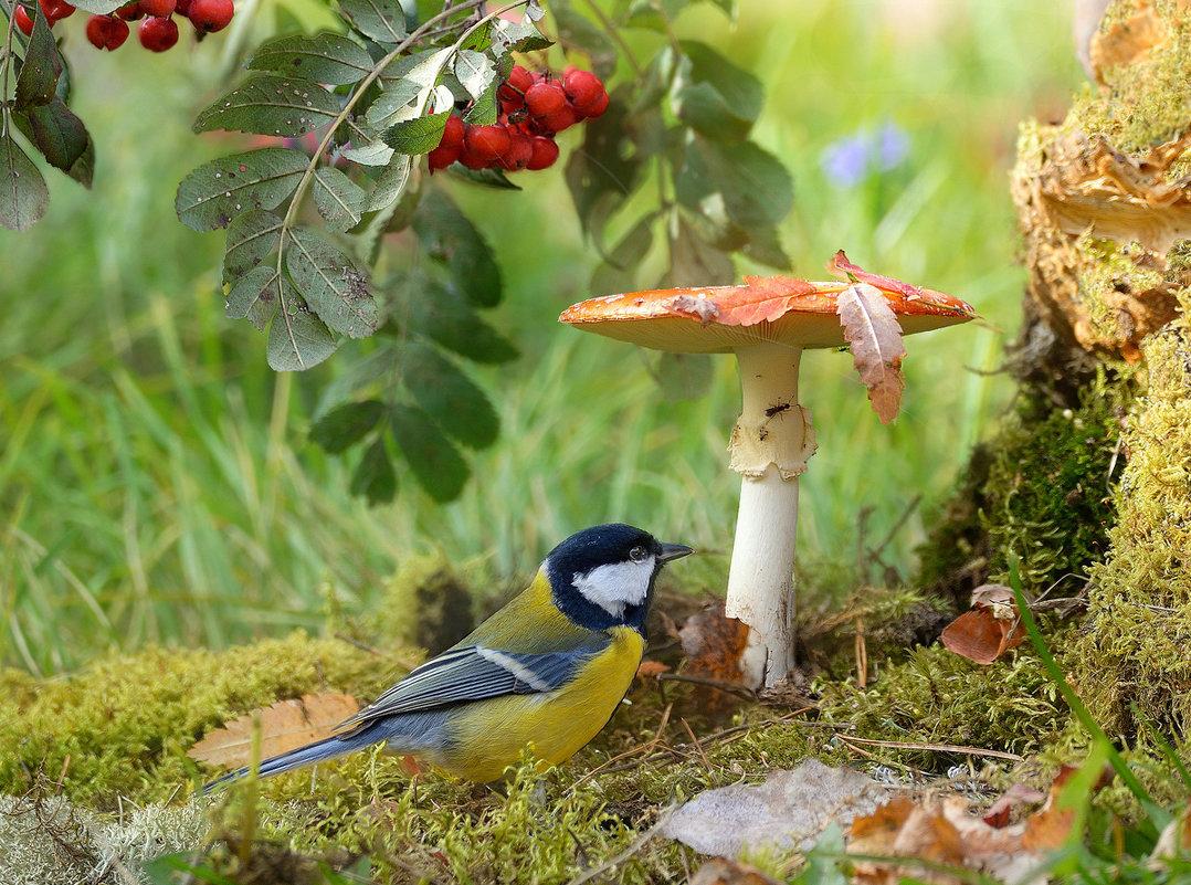 картинки с лесными птичками этой новелле фактически
