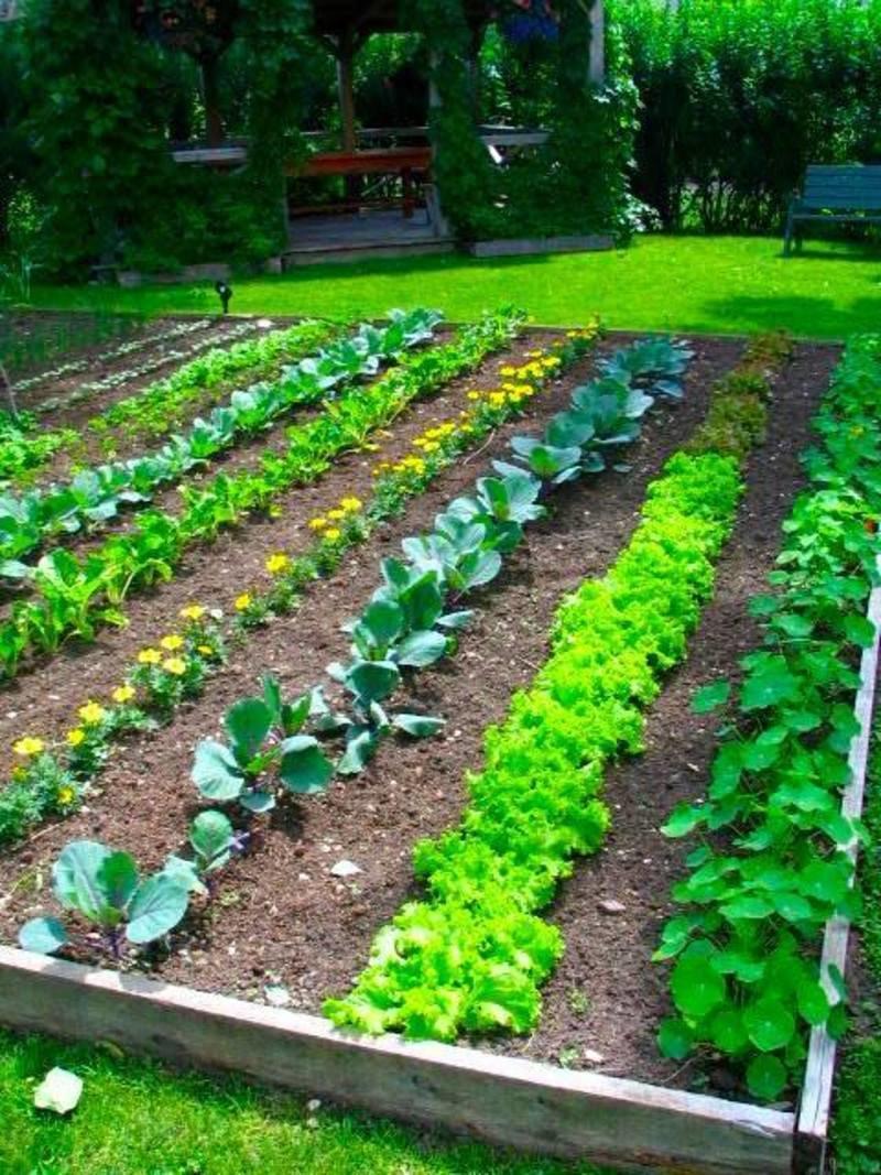 выращивание семян овощных культур на приусадебных участках