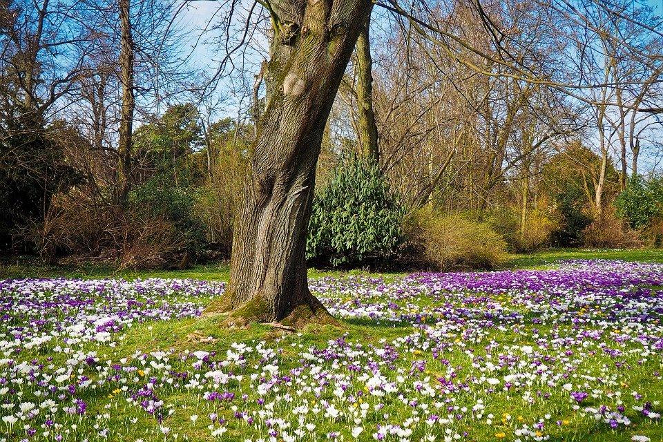 фото красивые картинки с изображением весны знатнейших