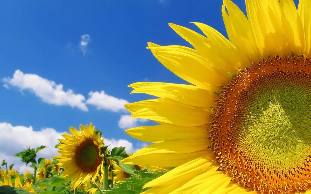 Открытки фоны солнечные, открытка