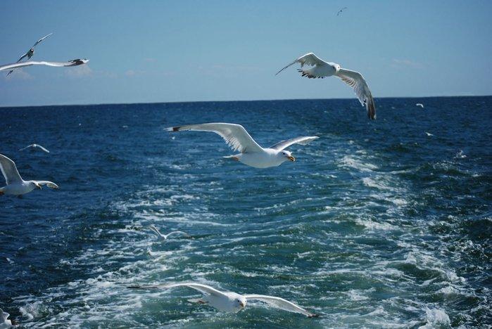Картинки чайка над морем, смешное животное