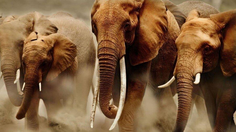Открытка контрабас, слоники картинки красивые